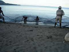 Fishermen working the nets off the beach
