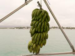A sign of a true cruising boat -- bananas on the rail!