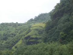 Use your imagination to see the lion's head in the hillside greenery